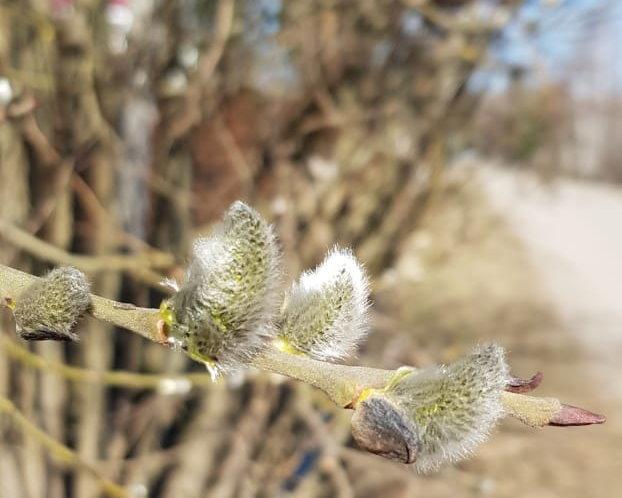 Весна СНТ Мичуринец гувд москвы